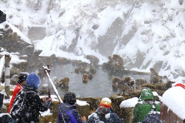 温泉に入っている猿を見るためにはここから更に5分くらい