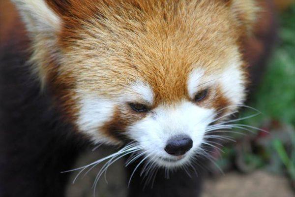 ichikawa-zoo014