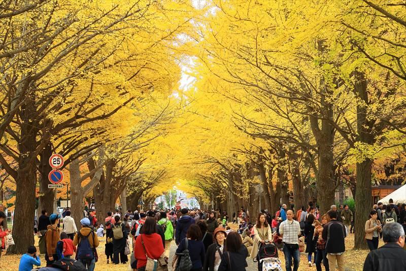 北海道大学 金葉祭