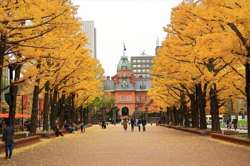 赤れんが庁舎前の銀杏並木