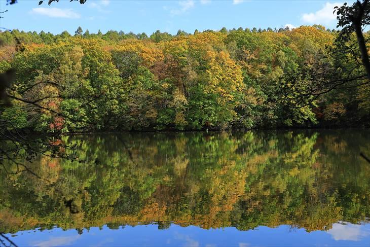 西岡公園(西岡水源池)の紅葉