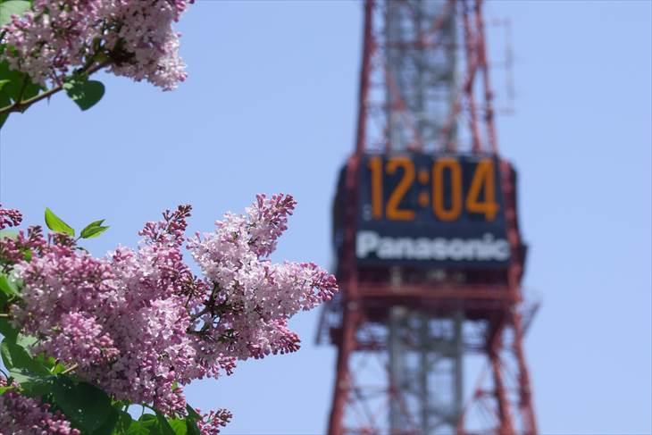 さっぽろテレビ塔とライラックの花