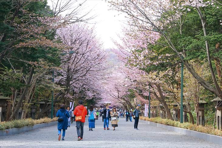 北海道神宮の表参道