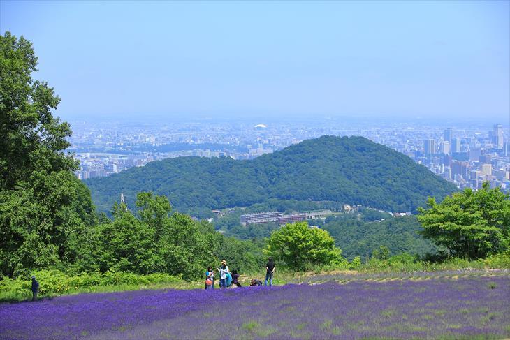 幌見峠ラベンダー園から見る円山