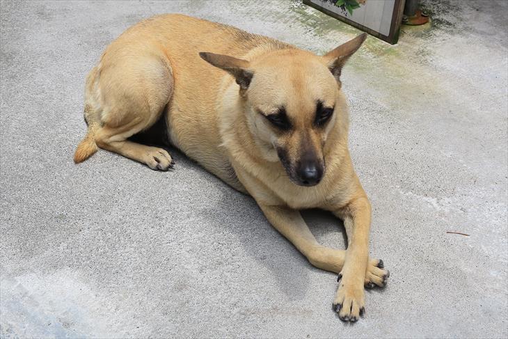 烏来温泉の犬