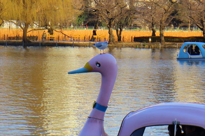 上野公園の不忍池