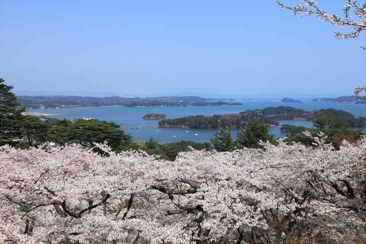 西行戻しの松公園から見る桜