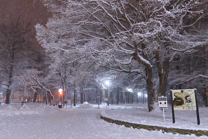 夜の円山公園