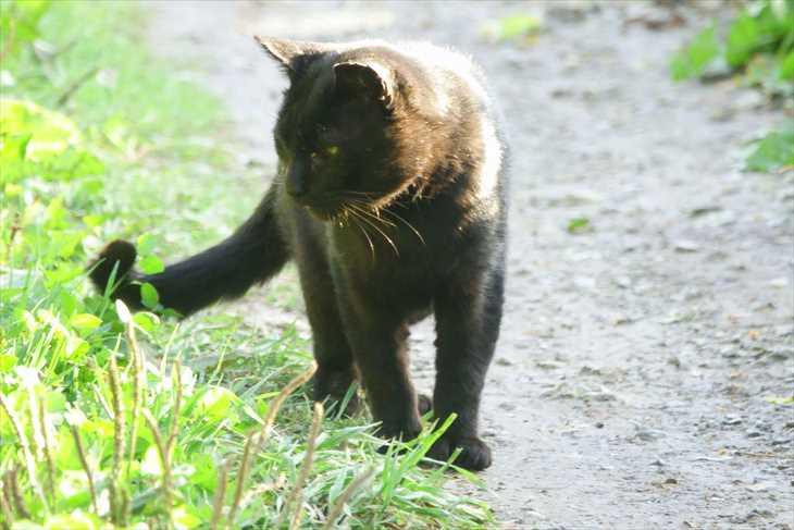 小樽で見かけた猫