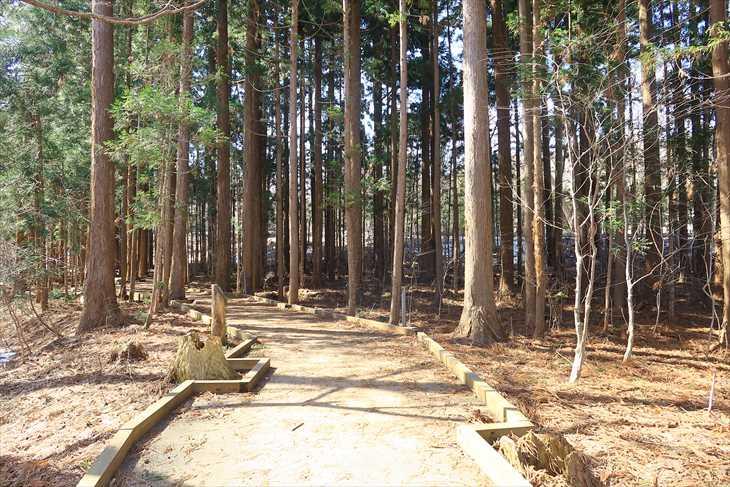 円山公園 木道